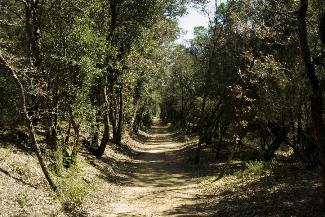 Bosc de Caldes de malavella, Ruta Termal