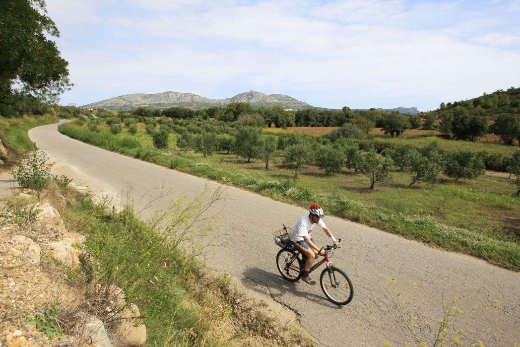 Ciclista davant d'unes vinyes del Baix Empordà