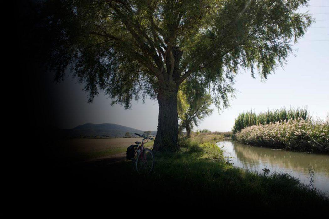 Bicicleta recolzada a un arbre del Baix Empordà